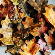 How to Make Fall Gumpaste Leaves