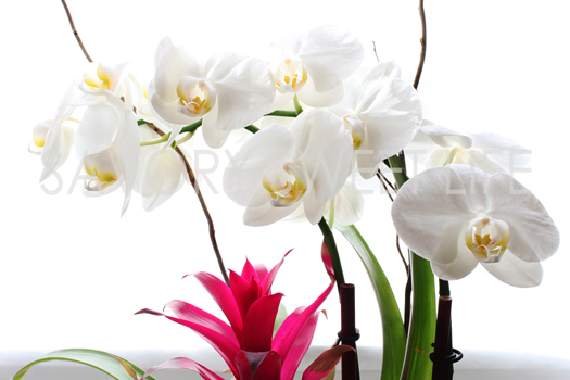 ssl orchids web1 Mothers Day and Cookbook News!
