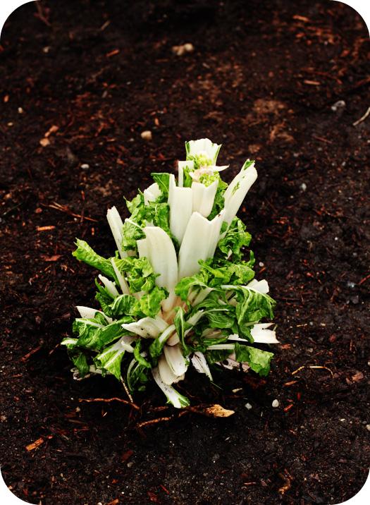 Remembering loved ones memorial gardens for Garden memorials for loved ones